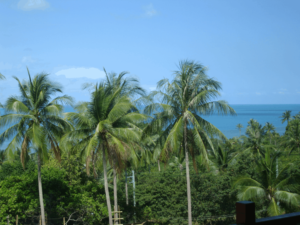 Palmtrees in Samui