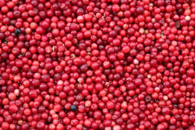 cranberries fall