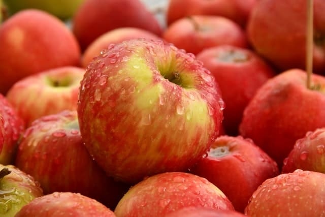 apples in fall