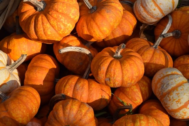 pumpkin in fall